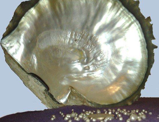 Genisis perle naturali