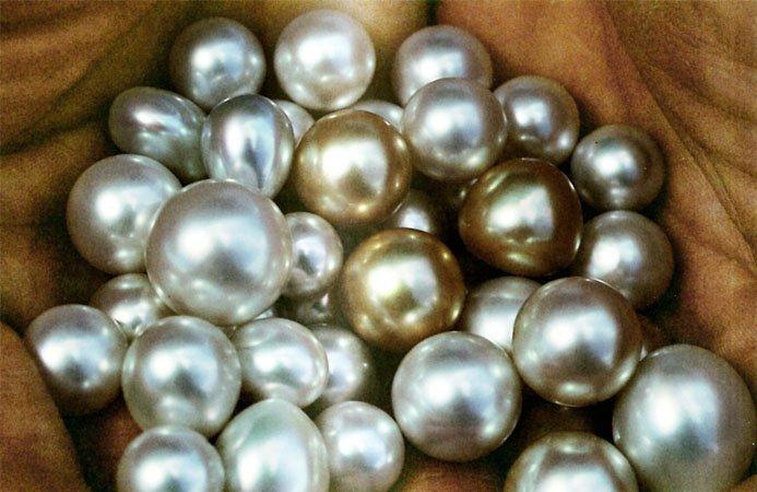 Genisi Le perle Australiane