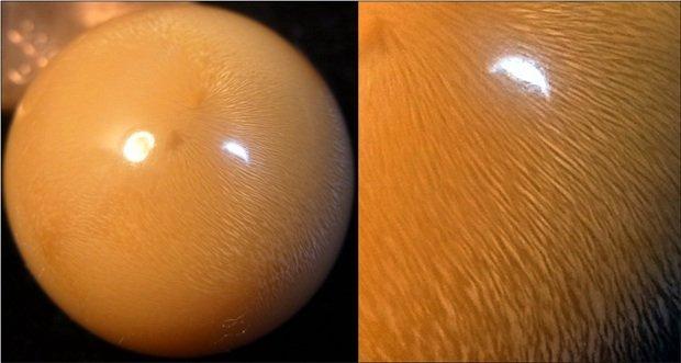 Genisi Perle naturali Cassis