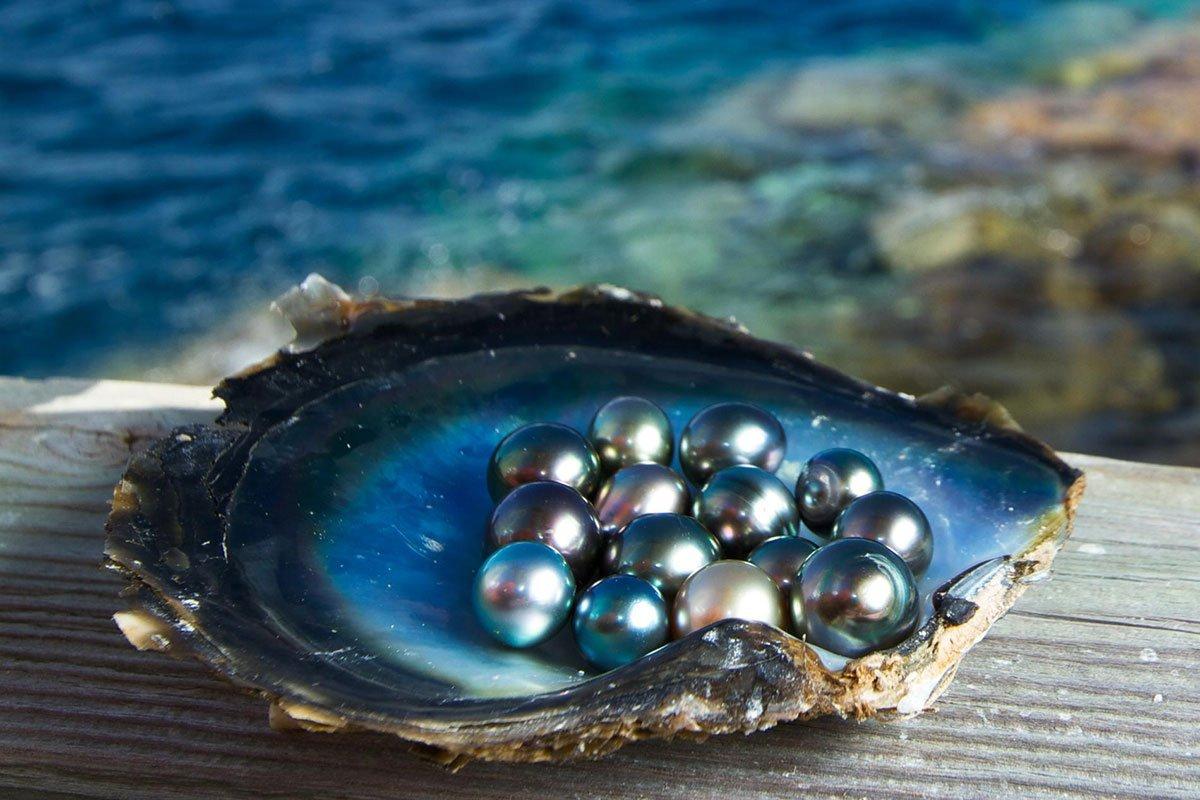 ostrica-perle