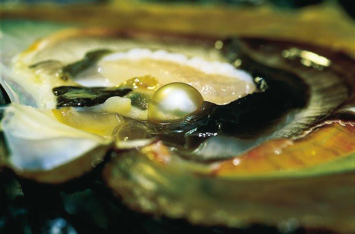 costo perla di ostrica