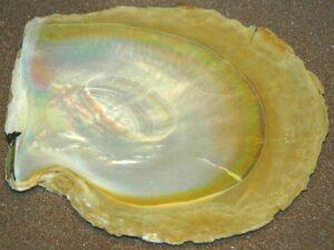 perla d'ostrica